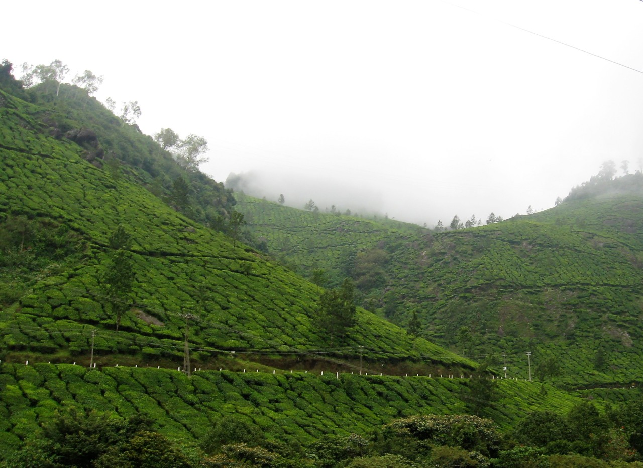 Munnar – Lush Green Hill – God's Abode – P1