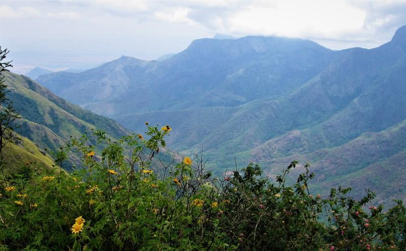 Munnar – Lush Green Hills – God's Abode –P4