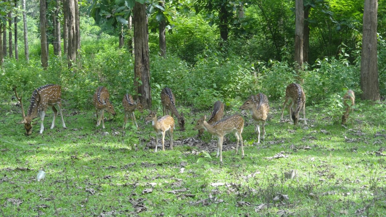 Wayanad – Wildlife Sanctuary – Day 2 –P4