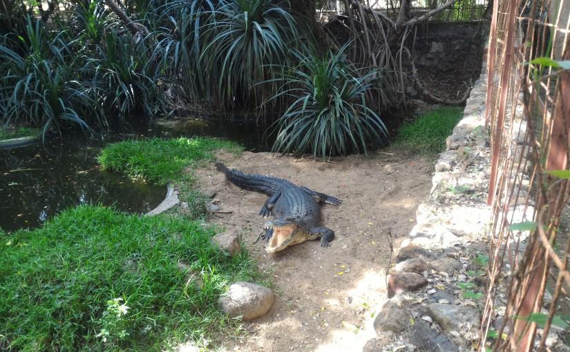 ECR Attraction – Crocodile Park –P1