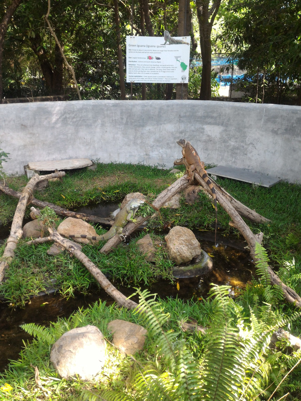 ECR Attraction – Crocodile Park – P3
