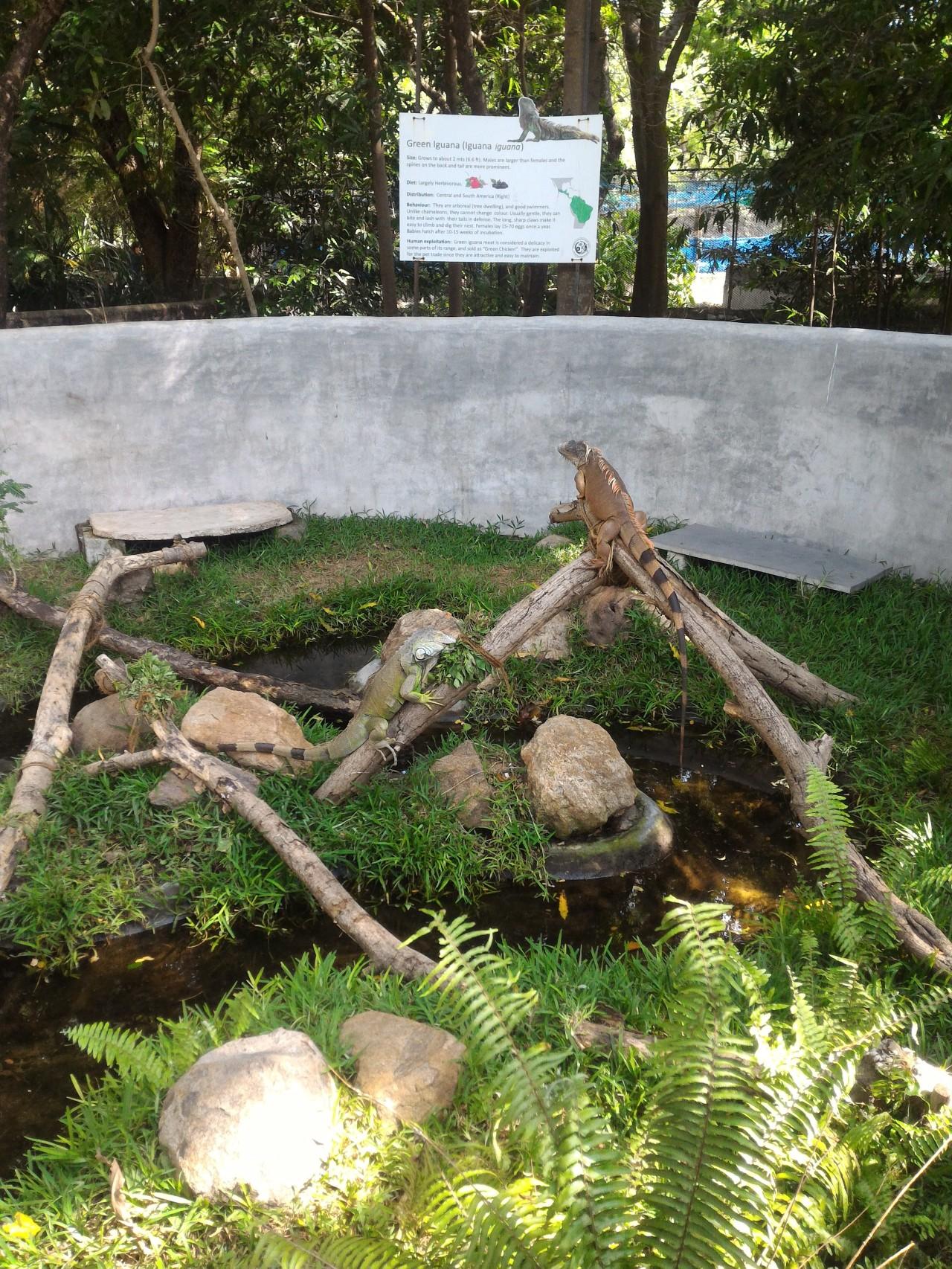 ECR Attraction – Crocodile Park –P3