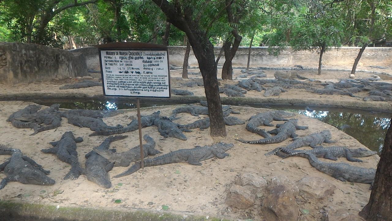 ECR Attraction – Crocodile Park –P2