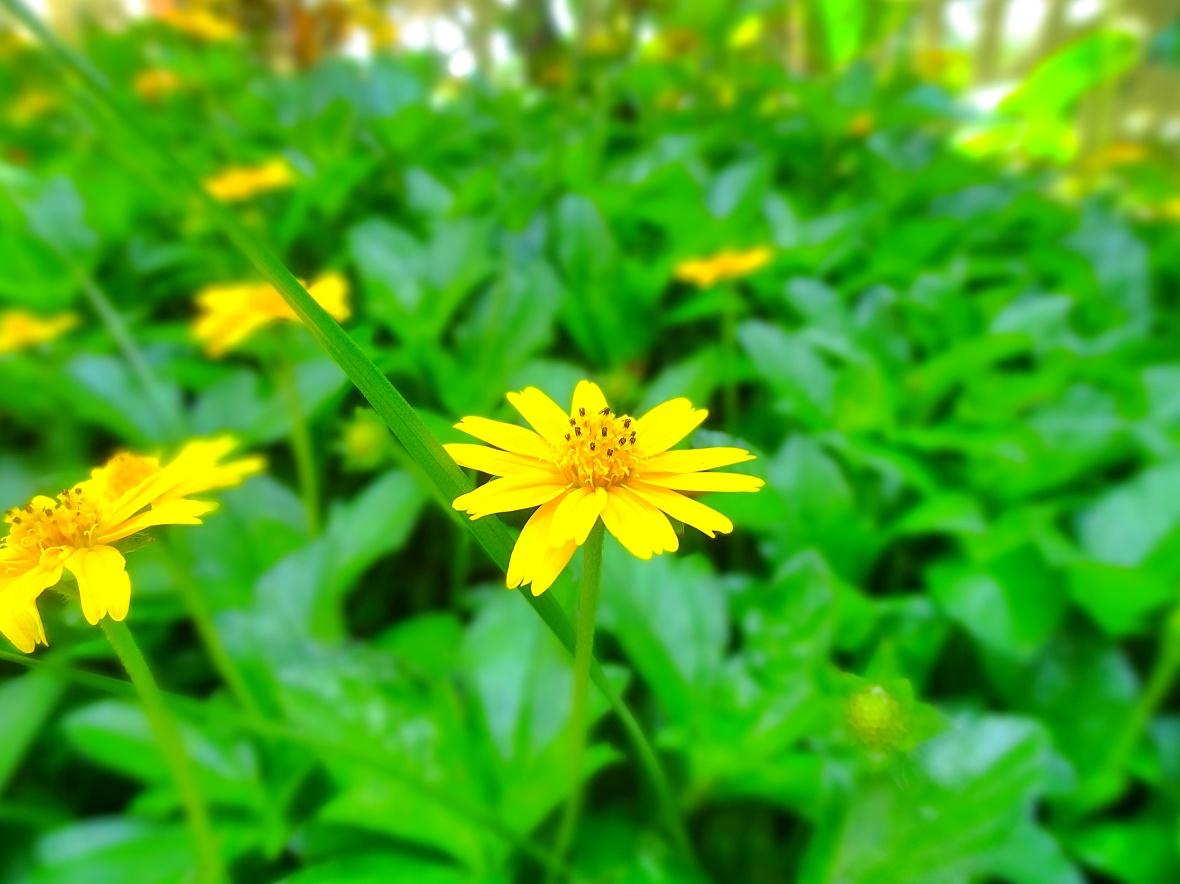 DSC03560_Snapseed